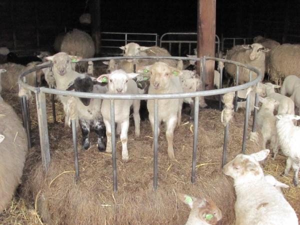 schapencreche