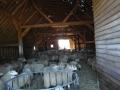 schapen in kooi2