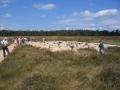 herder, schapen en bezoekers