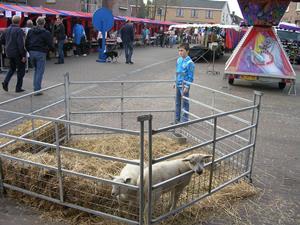 Lind Mert schapen